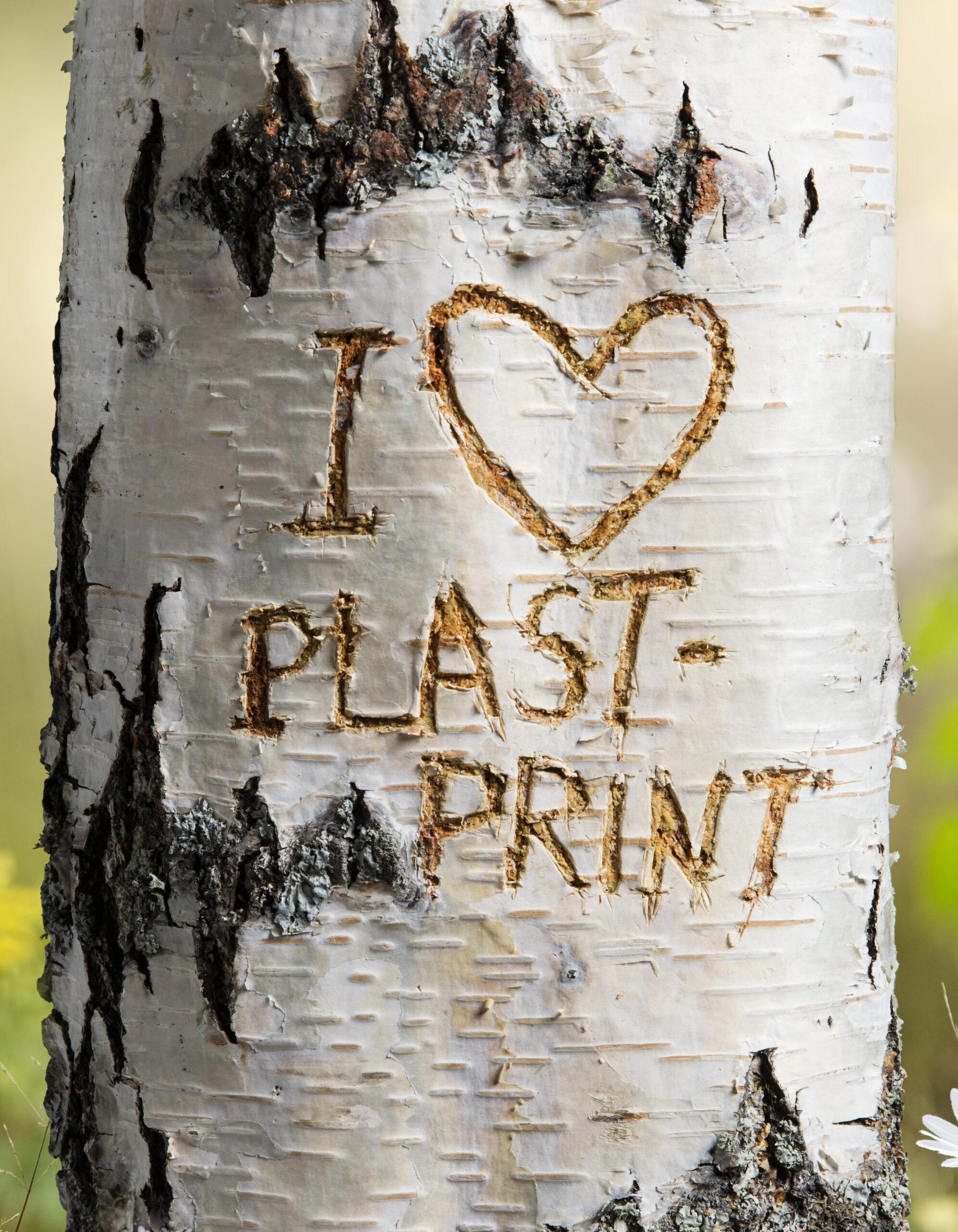 Reklamfotografering text i trädstam
